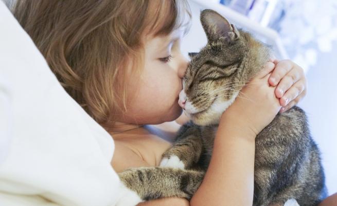Morsi dei gatti: quali i rischi?