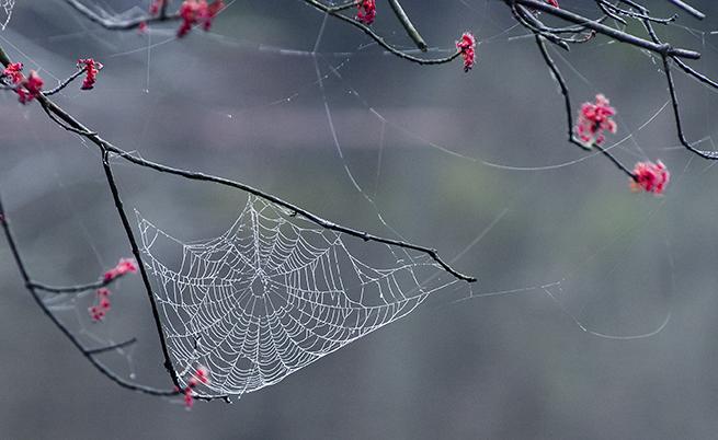 Dalla seta dei ragni una speranza per la ricostruzione dei tessuti