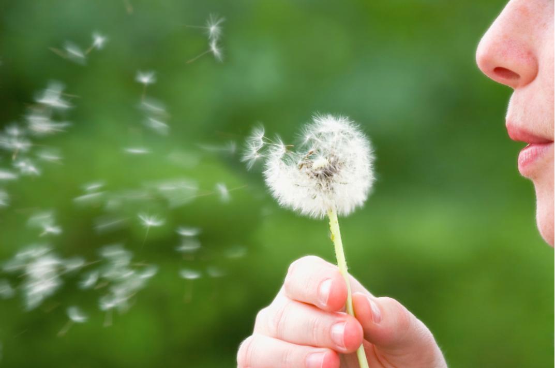 Da Nord a Sud: ecco i principali pollini responsabili delle allergie