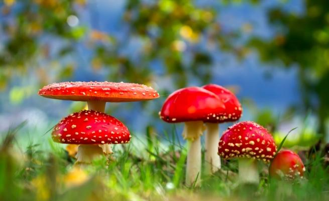 I benefici nascosti dei funghetti allucinogeni