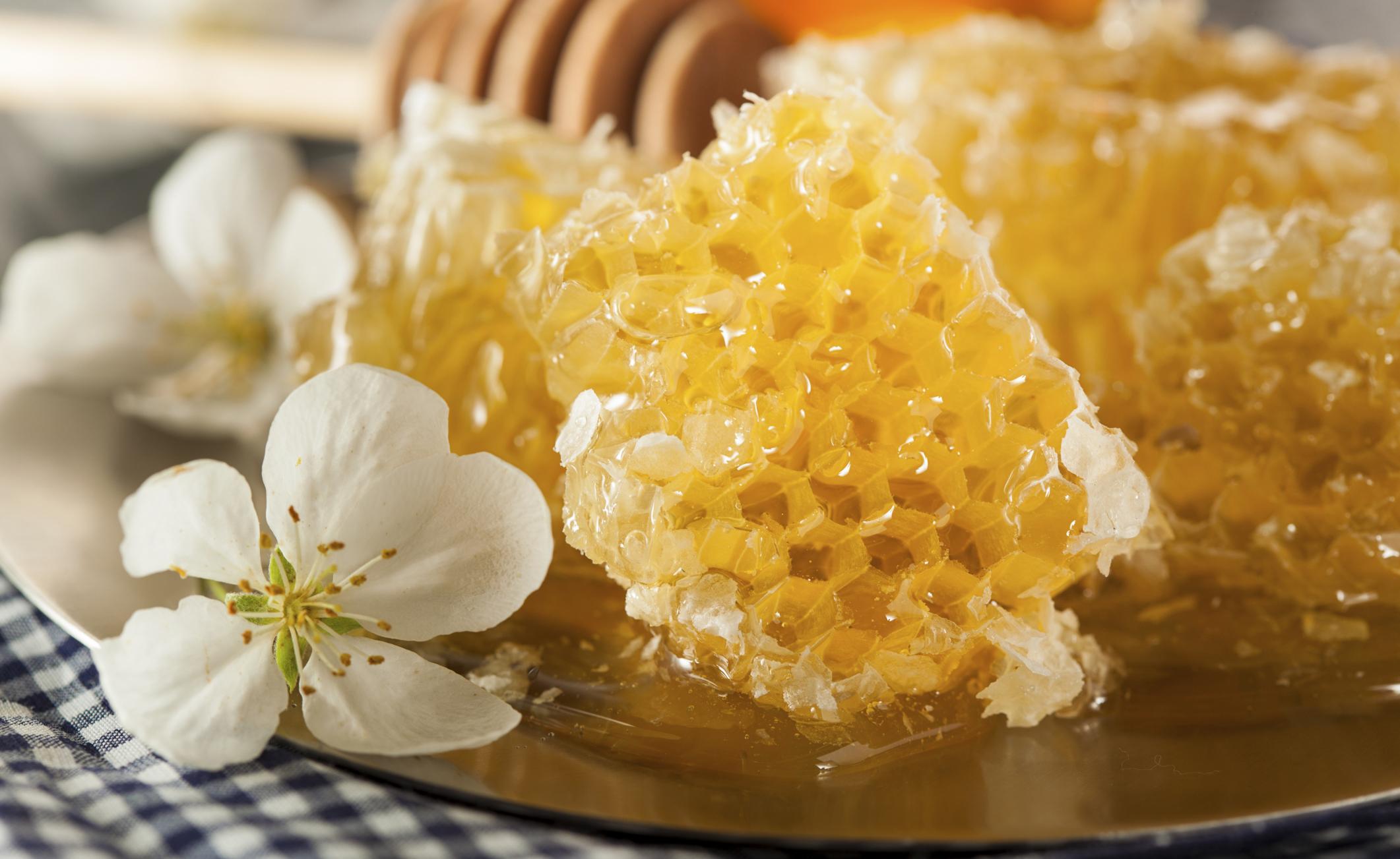 Timo e faggio: il miele di chi vuole stare bene