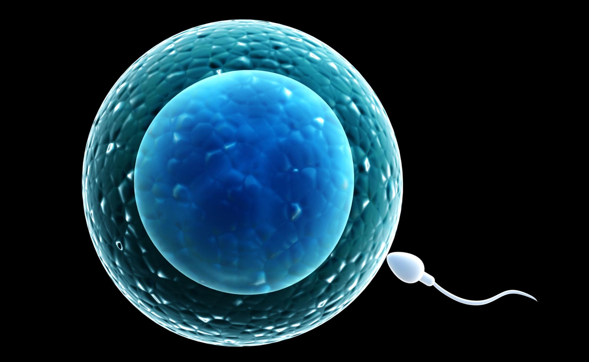In futuro anche gli uomini potrebbero procreare