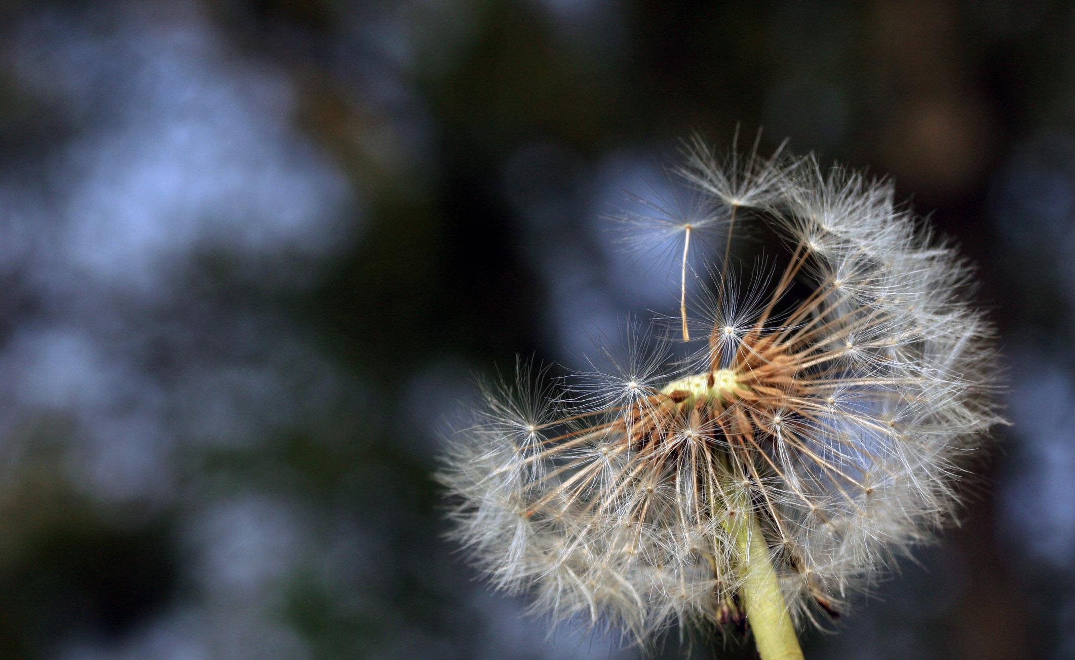 Allergie stagionali: tutti i modi per combatterle al meglio
