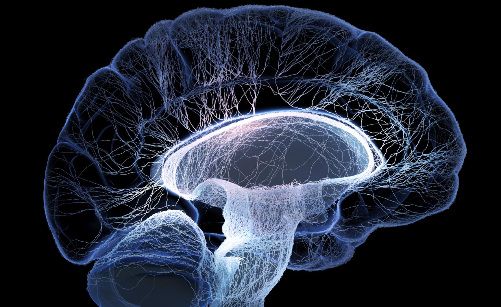 Cellule fetali nel cervello per combattere il Parkinson