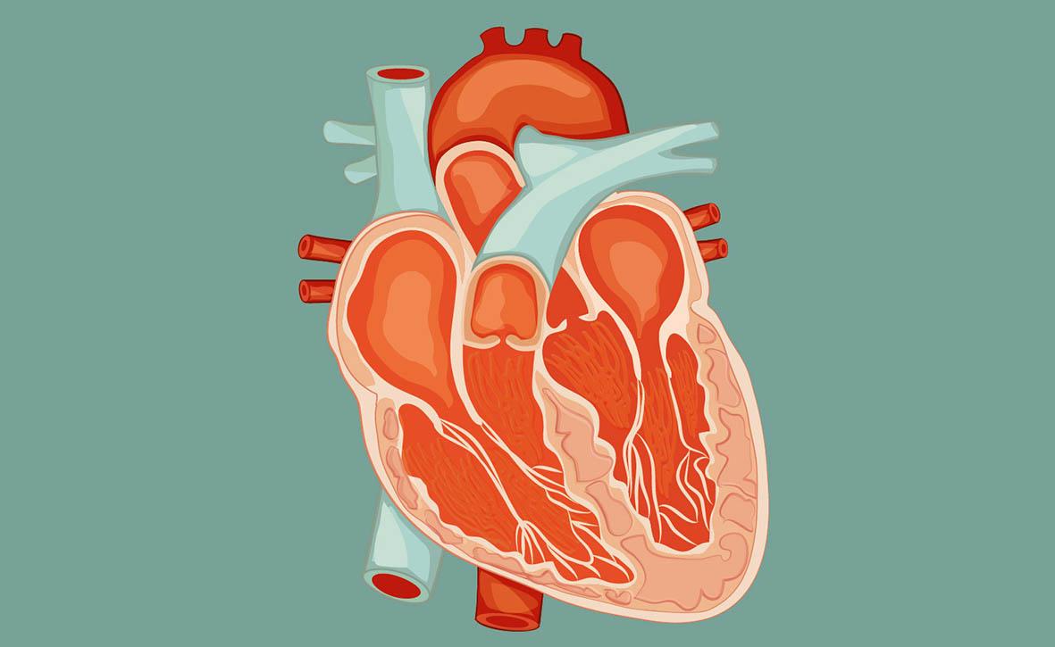 Miocardite virale: prima causa di morte improvvisa per gli uomini sotto i 40 anni