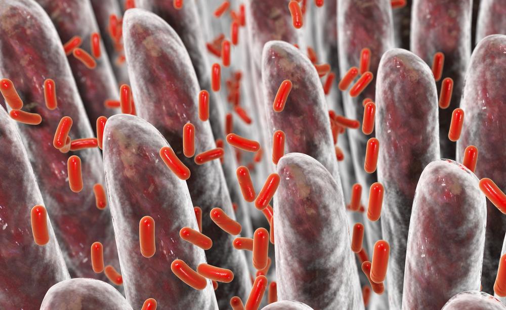 Celiachia: alcuni batteri intestinali potrebbero determinare la malattia