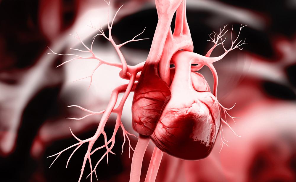 Al cuore delle malattie cardiovascolari: comprenderle per prevenirle