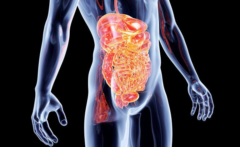 gastroenterite negli adulti dieta per perdere peso velocemente gratis