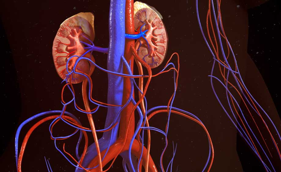 Azotemia e creatinina alte: attenzione alla salute dei reni