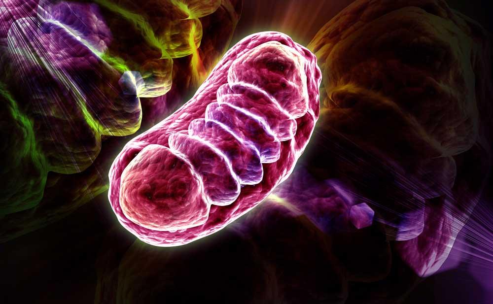 Parkinson: scoperto interruttore per difendere la degenerazione dei neuroni