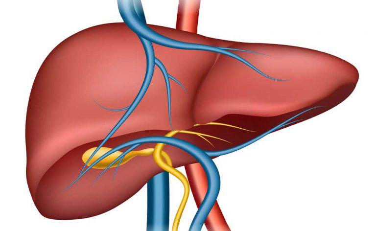 tumore al fegato cosa mangiare