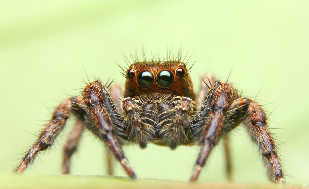 Il veleno dei ragni per prevenire i danni cerebrali dell'ictus