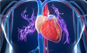 Recupero dopo un infarto: arriva un gel iniettabile