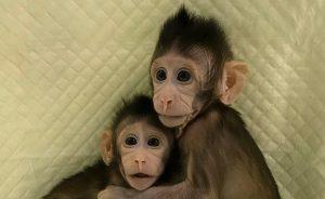 Clonazione macachi: è lecito clonare?