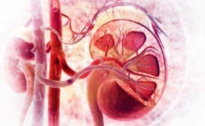 esami reni: esame delle urine e altri esami