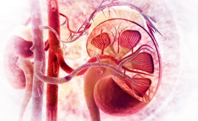 Tutti gli esami che dobbiamo fare per monitorare i nostri reni