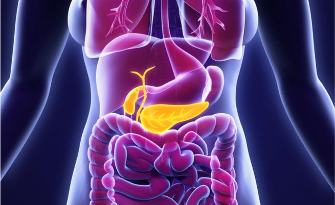 Lipasi alta? Pancreas, reni e cistifellea: ecco tutte le cause