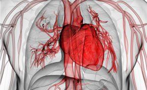 disfuzione erettile e disturbi cardiaci: il legame