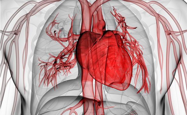 Quando la disfunzione erettile nasconde disturbi cardiaci