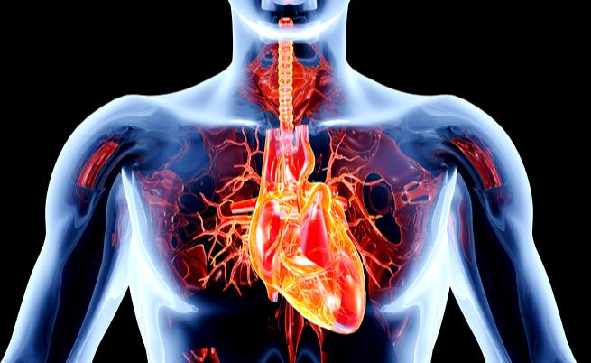 Affaticamento, vertigini e affanno: attenzione alle valvole cardiache!