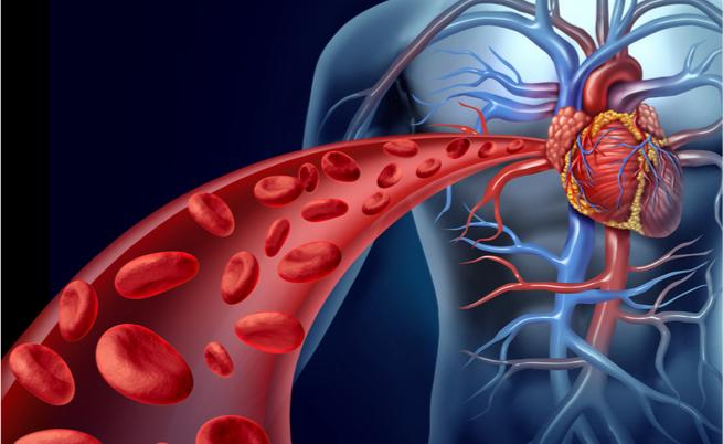 Enzimi cardiaci alti: la colpa è del cuore ma non solo