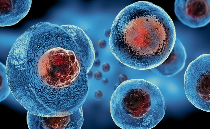 Cellule staminali adulte (mesenchimali): scopriamo insieme cosa curano!