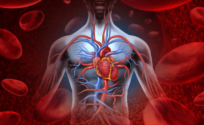 Cuore polmonare: quando il ventricolo si ingrossa per colpa dei polmoni