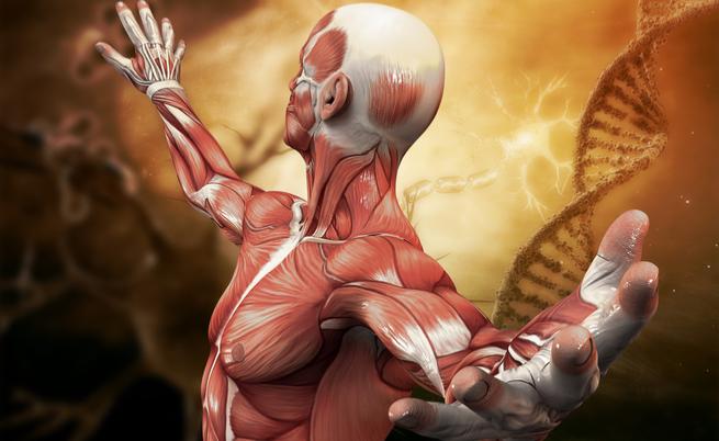 15 curiosità che NON conosci del tuo corpo