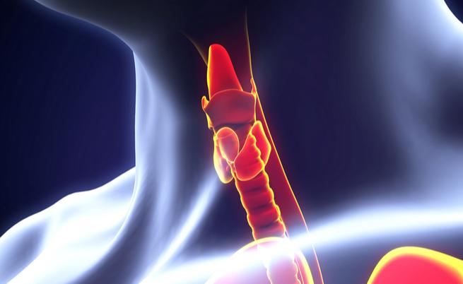 Perturbatori endocrini: attenzione alle sostanze che causano malattie ormonali