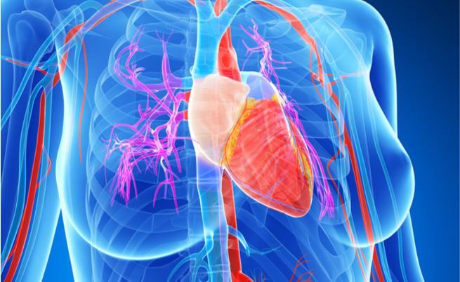 Frutta secca, arriva la conferma: mantiene il cuore in buona salute