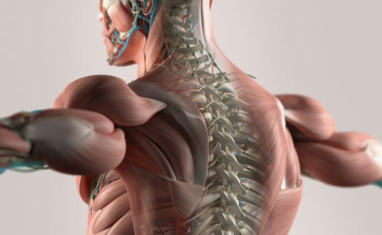 Mal di schiena e mal di collo? Come eseguire un massaggio contro il dolore