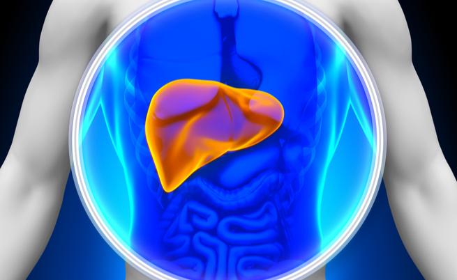 Anche il fegato può soffrire di malattie autoimmuni