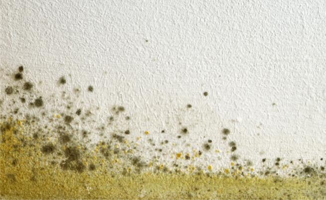 10 segreti per mantenere la casa pulita (evitando inutili contagi)