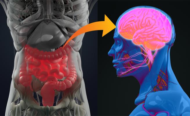 I batteri dell'intestino potrebbero causare il Parkinson? Proprio così