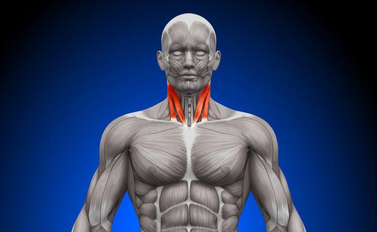 La circonferenza del collo può svelare il rischio di apnee notturne