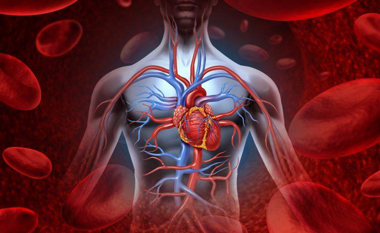 Omocisteina alta: quando il nostro cuore è a rischio