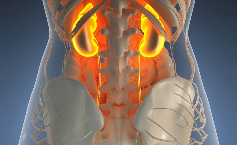 Trapianto di rene, dubbi e difficoltà: le risposte giuste con ANTR