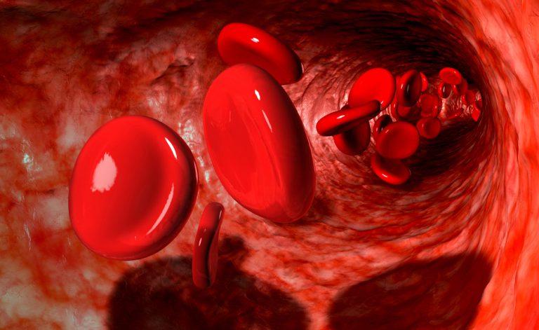 Una guida ai gruppi sanguigni