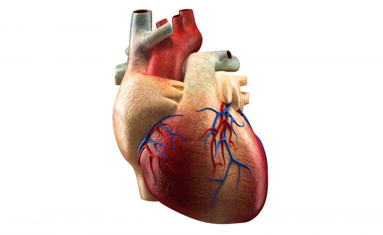 Palpitazione al cuore? Si possono calmare