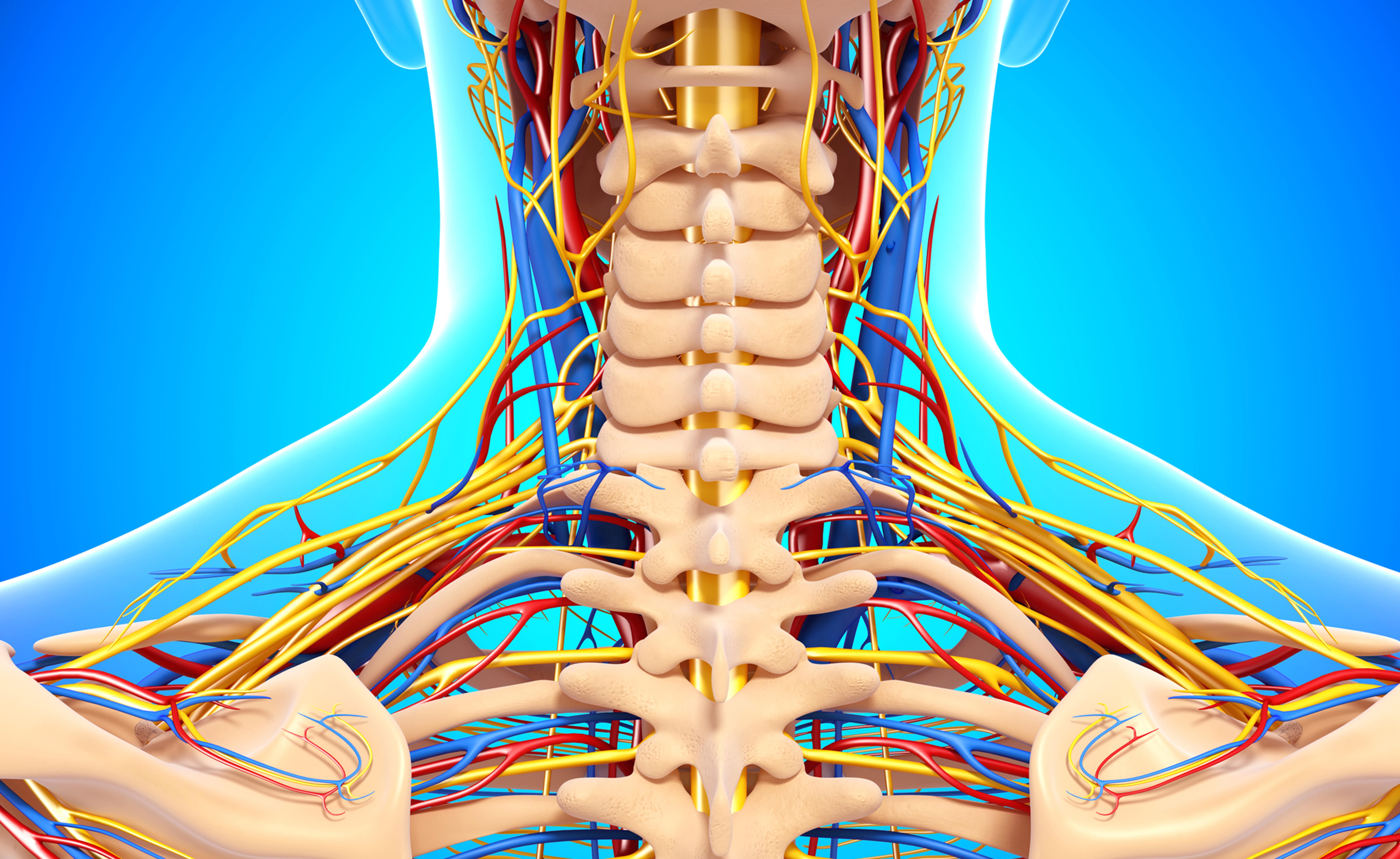 Polineuropatia: quando sono i nervi a essere colpiti