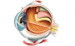 Gli effetti negativi del Viagra sulla vista: quali sono?