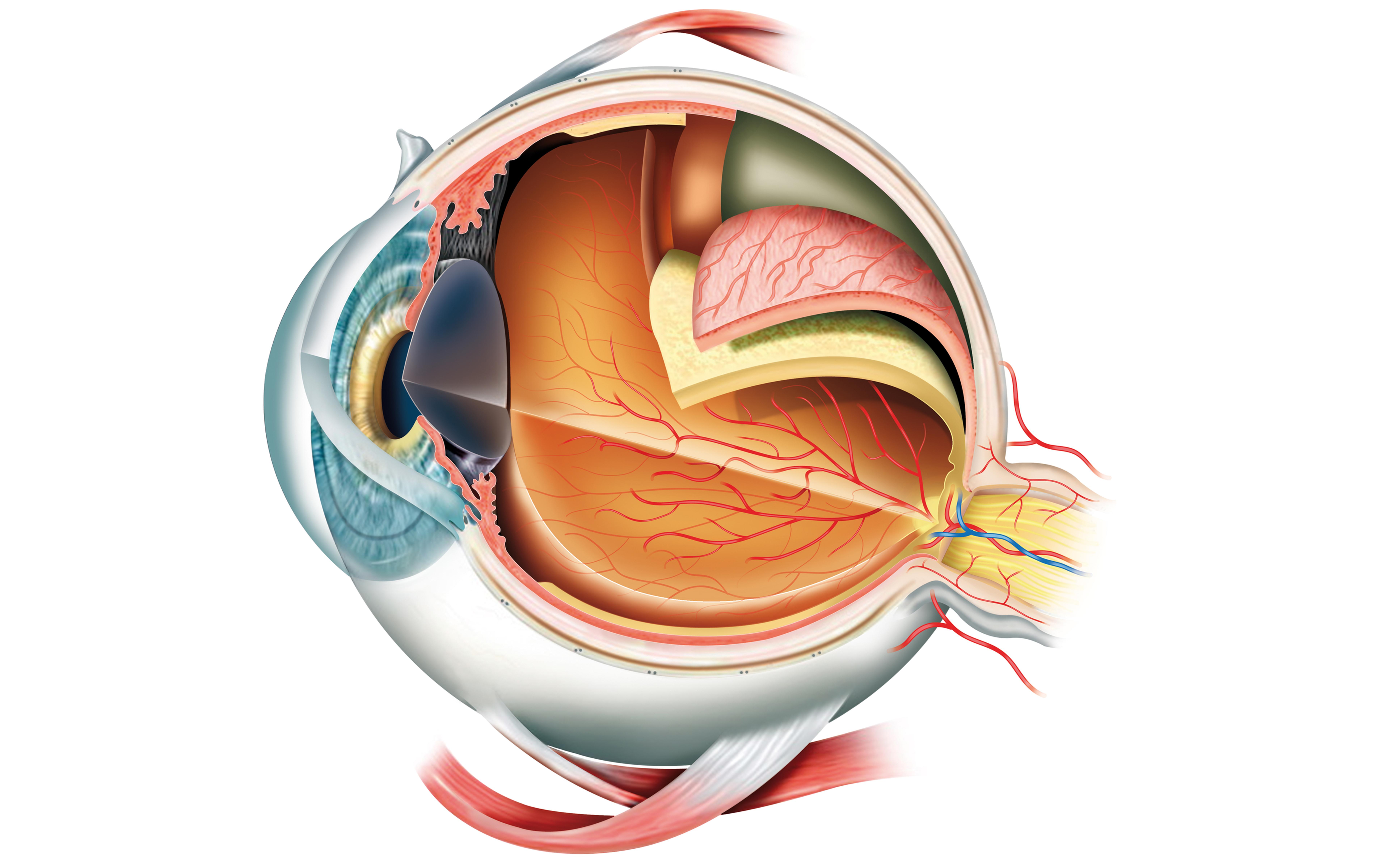 Sembra che il Viagra possa danneggiare la vista in modo permanente