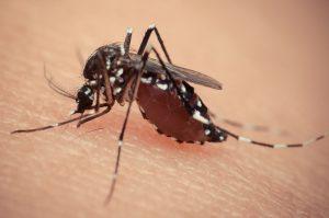 Perché le zanzare pungono me?