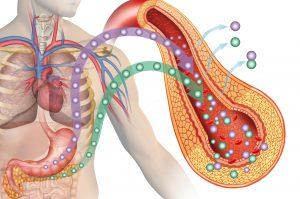 Diabete: Insuline nel Sangue